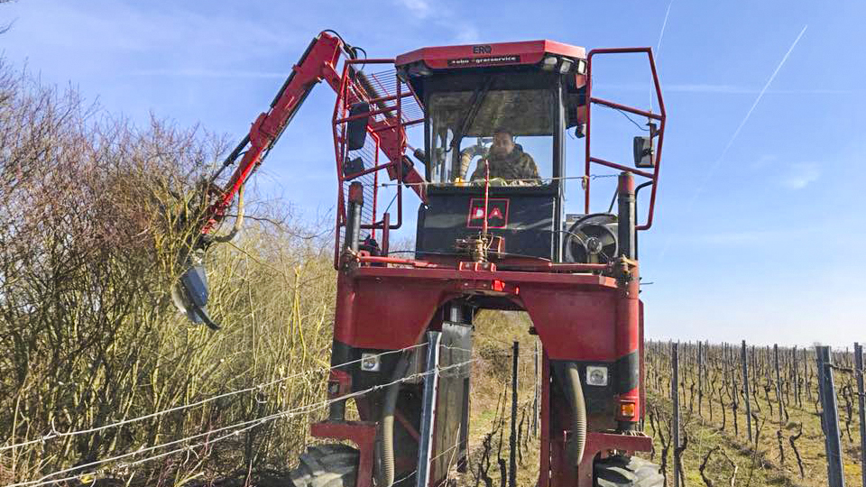 Grape harvester drives over the vineyard rows and trims hedgerows